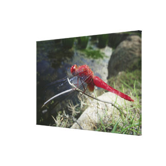 Dragonfly perching on branch, close up canvas print