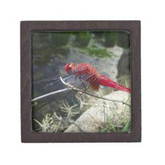 Dragonfly perching on branch, close up keepsake box