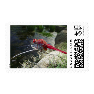 Dragonfly perching on branch, close up postage stamp