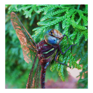 Dragonfly photography poster
