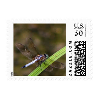 Dragonfly Postage