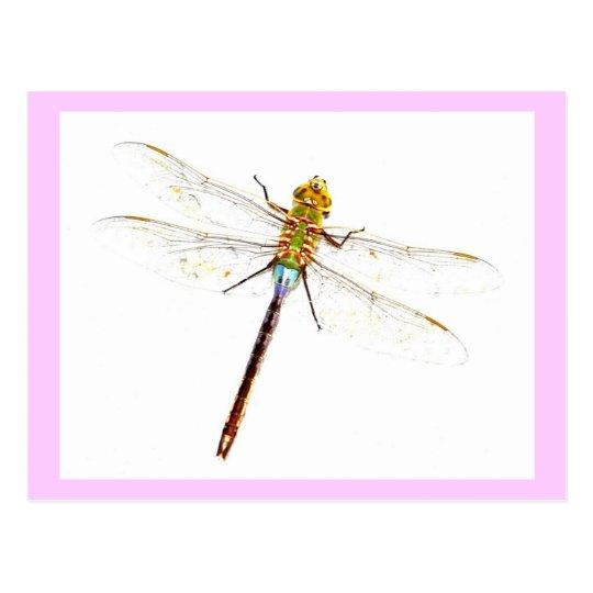 Dragonfly Postcard