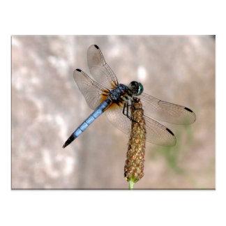 Dragonfly! Postcard