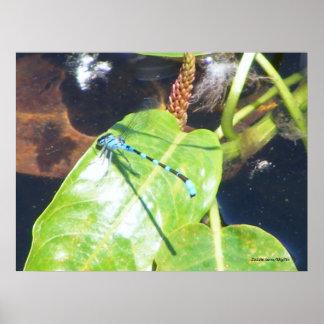 Dragonfly Print