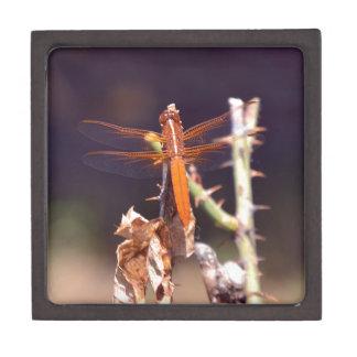 Dragonfly Premium Trinket Box