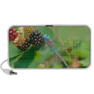 Dragonfly Raspberries doodle speeker Travelling Speaker