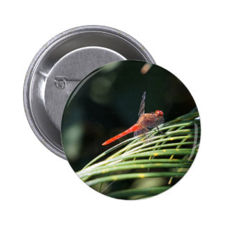DRAGONFLY RED RURAL QUEENSLAND AUSTRALIA PINBACK BUTTONS