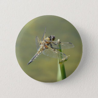 Dragonfly rest on the water front pinback button