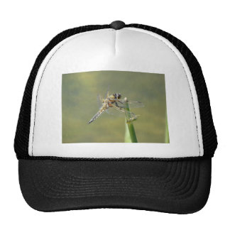 Dragonfly rest on the water front trucker hat