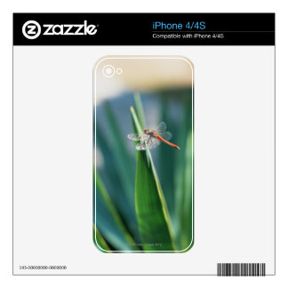 Dragonfly Skins For iPhone 4S