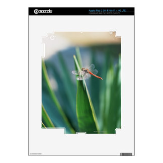 Dragonfly Skins For iPad 3