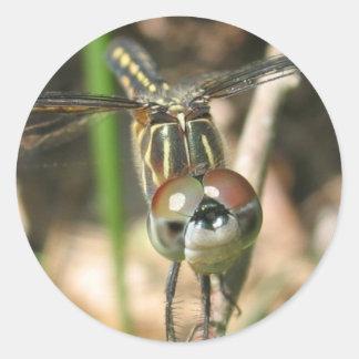 """Dragonfly Smile"" Sticker Sheet"
