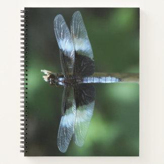 Dragonfly,