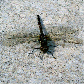 Dragonfly Statuette
