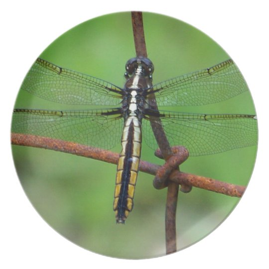 DRAGONFLY STOPS BY THE GARDEN MELAMINE PLATE