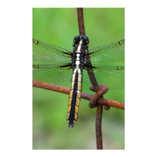 DRAGONFLY STOPS BY THE GARDEN STATIONERY
