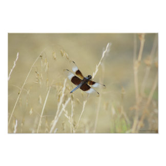 Dragonfly Summer Poster