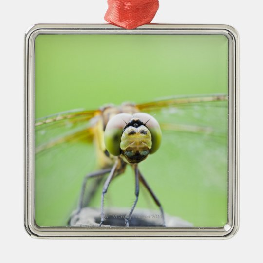 Dragonfly (Sympetrum infuscatum) Metal Ornament
