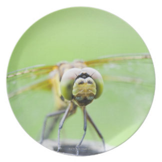 Dragonfly (Sympetrum infuscatum) Plate