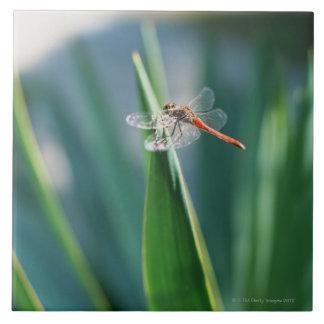 Dragonfly Large Square Tile