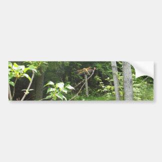 Dragonfly Tree Scene Car Bumper Sticker