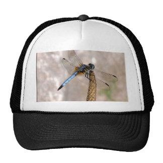 Dragonfly! Trucker Hat