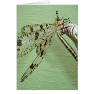Dragonfly Wings Card