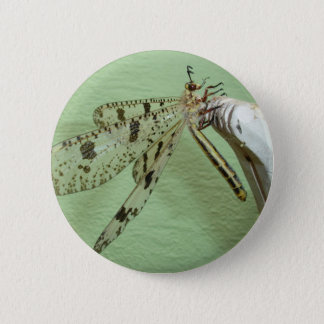 Dragonfly Wings Pinback Button