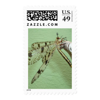 Dragonfly Wings Stamp
