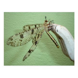 Dragonfly Wings Post Card