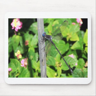 Dragonfly with blue eyes mouse pad