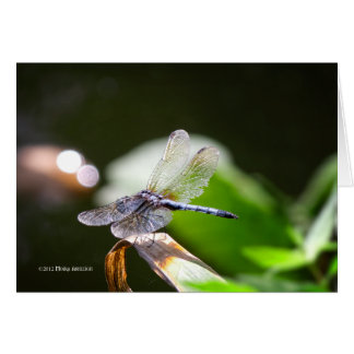 Dragonfly with bokeh card
