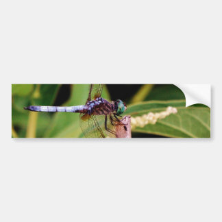 Dragonfly with white flowers bumper stickers