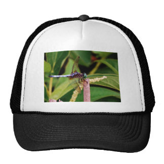 Dragonfly with white flowers mesh hat