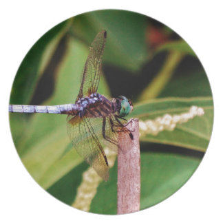 Dragonfly with white flowers dinner plate