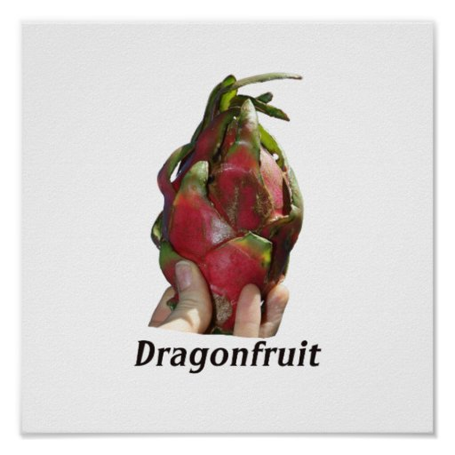 Dragonfruit held in fingers with text photo Pitaya Print