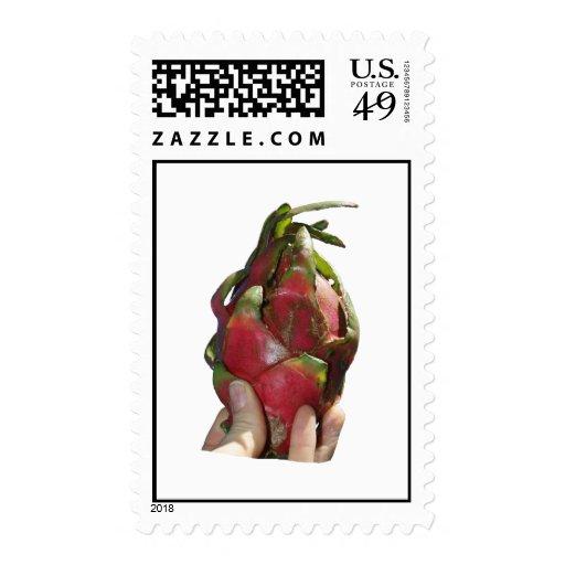 Dragonfruit se sostuvo en foto de los dedos sellos