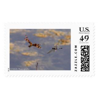 Dragons in flight stamp