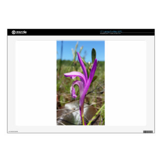 """Dragon's Mouth Orchid Arethusa bubosa 17"""" Laptop Decal"""