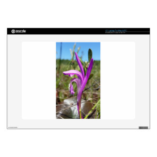 Dragon's Mouth Orchid Arethusa bubosa Laptop Decals
