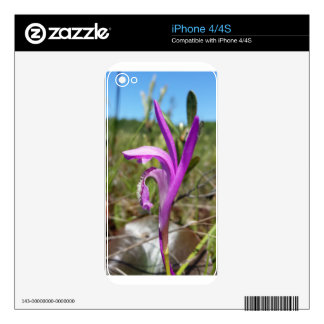 Dragon's Mouth Orchid Arethusa bubosa Skins For iPhone 4S