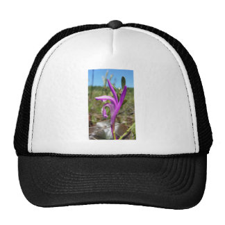 Dragon's Mouth Orchid (Arethusa bulbosa) Trucker Hat