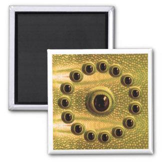 Dragon's Sharp HD Definition Camera Eye Magnet