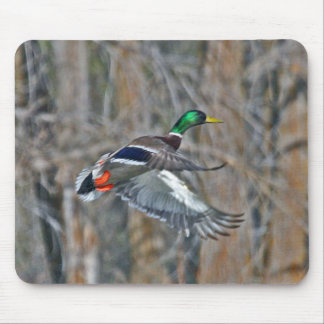Drake mallard in flight mouse pad