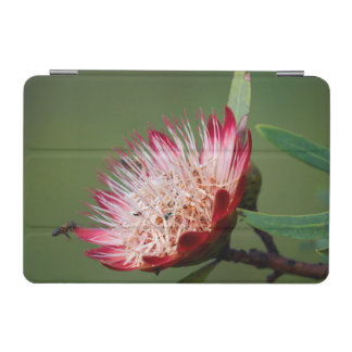 Drakensberg Sugarbush (Protea Dracomontana) Cover De iPad Mini