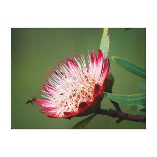Drakensberg Sugarbush (Protea Dracomontana) Lona Estirada Galerías