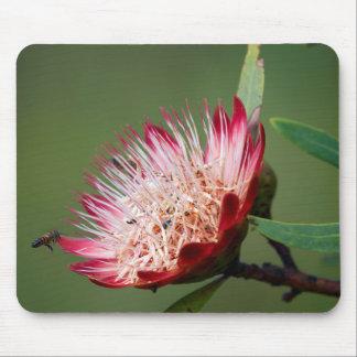 Drakensberg Sugarbush (Protea Dracomontana) Mouse Pad
