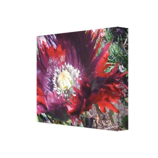 Drama Queen Poppy Stretched Canvas Print