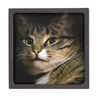 Dramatic Cat 4 Keepsake Box