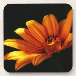 Dramatic Daisy ~ Floral Design Beverage Coaster